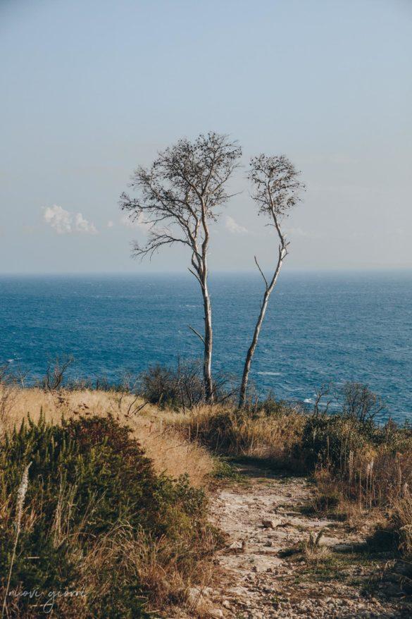 Vacanza in Italia alle Isole Tremiti - San Domino - Alberi - Nuovi Giorni Blog