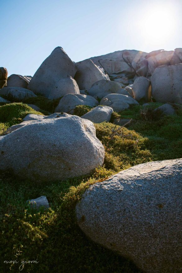Corsica Isola di Lavezzi Foto Nuovi Giorni Blog rocce Rocks
