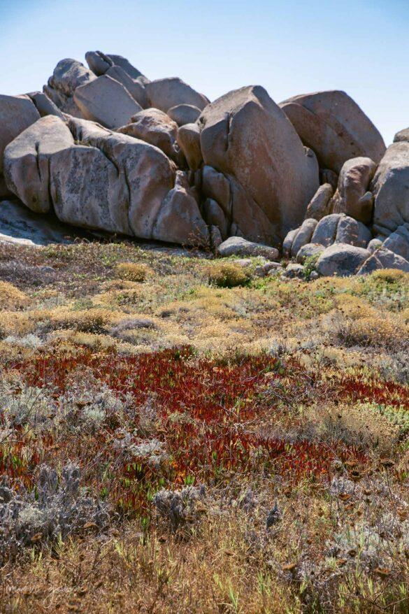 Corsica Isola di Lavezzi Natura Foto Nuovi Giorni Blog Ambiente