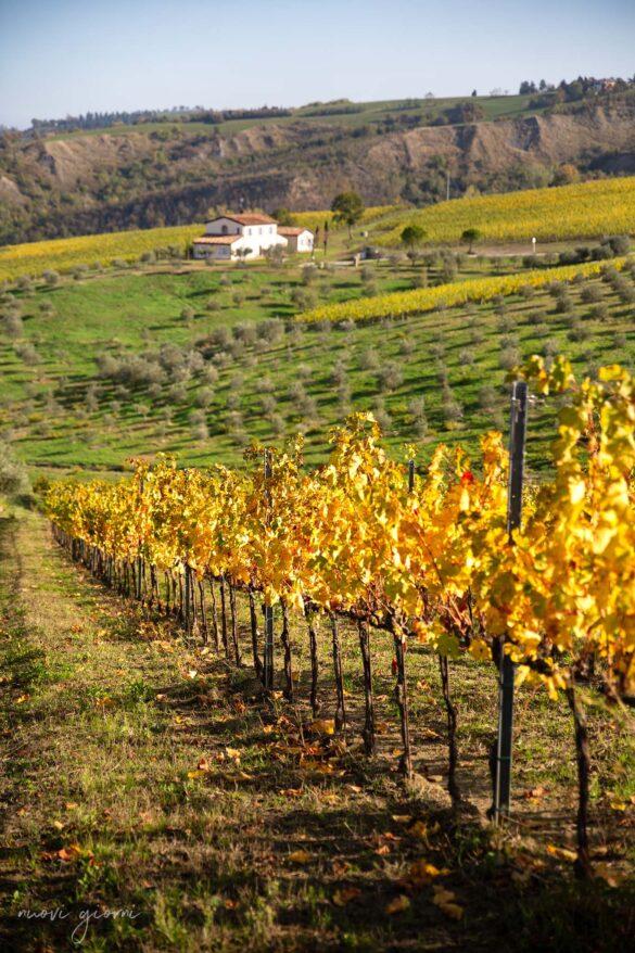 Foto tra le vigne del Borgo Condé Wine Resort in Emilia Romagna Vacanza Barbecue Campfire Lodge di Marco Agostini